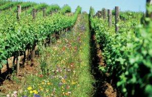 Plantas Úteis em Agricultura Biológica