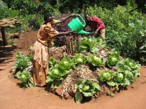 African_Gardens_Uganda_keyhole_garden_md