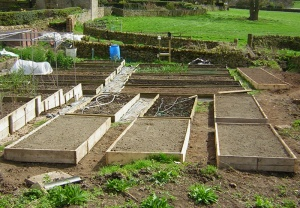 new_raised_beds