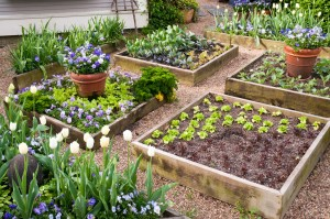 p-allen-beautiful-raised-beds-web