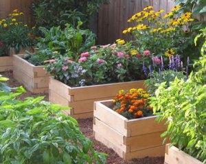 raised_beds-garden_photo-close-380x304