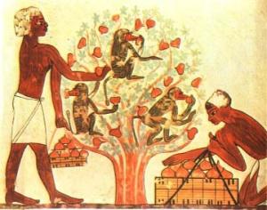 Egipto e os Figos